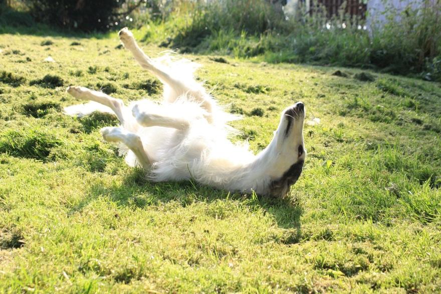 Hund-beim-Sonnenbad